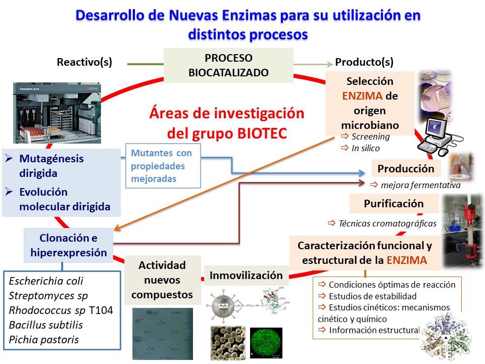 Proceso de obtención de enzimas.
