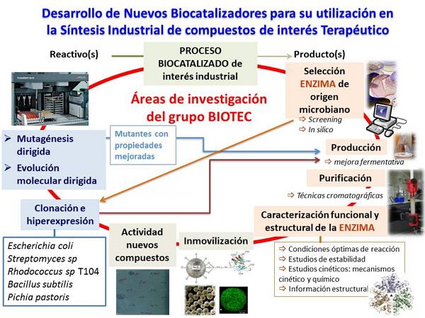 Áreas de investigación del grupo BIOTEC.