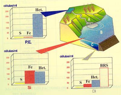 Drenajes ácidos de mina: caracterización microbiológica de una presa de estériles.