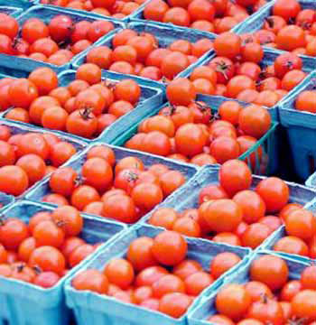 En España, durante el año 2003, se destinaron 1971 miles de T de tomates para su procesado.