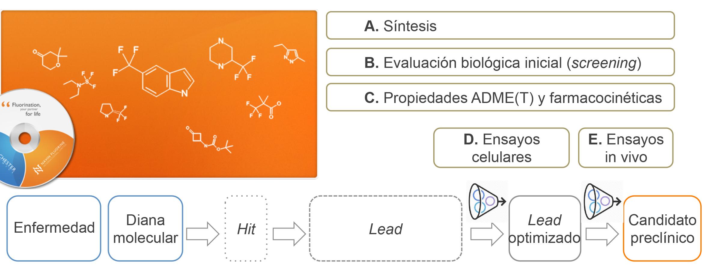Etapas de la fase preclínica en un programa de química médica para el descubrimiento de fármacos