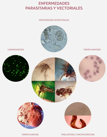 Enfermedades investigadas en el grupo de epidemiología y control de enfermedades transmisibles en veterinaria.