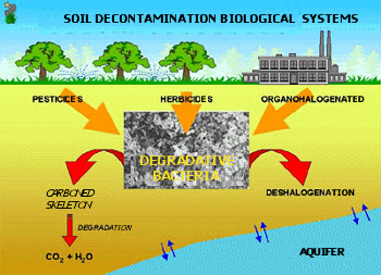 Esquema de la biodegradación de contaminantes en suelos.