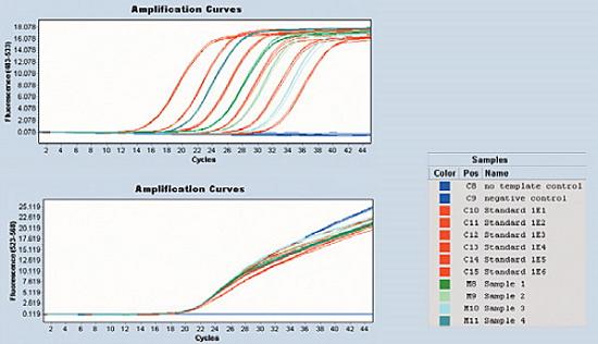 Ejemplo de un ensayo de cuantificación absoluta utilizando el equipo LightCycler® 480 II (Roche) realizado en el laboratorio de investigación de la Facultad de Odontología, UCM.