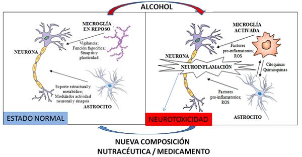 El consumo perjudicial de alcohol altera la homeostasis cerebral normal induciendo fenómenos de neuroinflamación, que consiste en la activación de la microglía y liberación de sustancias pro-inflamatorias y oxidantes (ROS), que pueden afectar a su vez a las neuronas. Si la neuroinflamación se cronifica puede dar lugar a fenómenos de toxicidad y daño neuronal. La nueva composición nutracéutica o medicamento puede prevenir la acción neuroinflamatoria del alcohol y el daño neuronal, así como conductas derivadas del abuso de alcohol como la anhedonia, la ansiedad y la depresión.