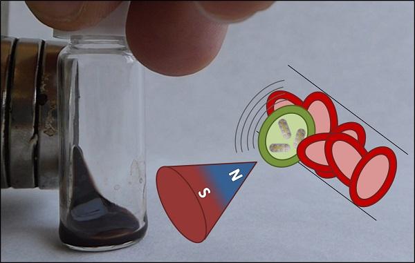 Representación de la nanoestructura con propiedades magneto-plasmónica. / Jesús Ovejero.