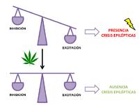 Cannabis medicinal: la gran esperanza de las familias que conviven con la epilepsia infantil