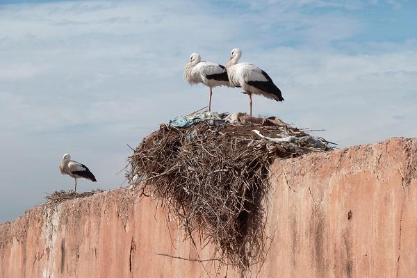 Ropa, cuerdas y cigarros, entre los desechos que conforman los nidos. / Alisan.