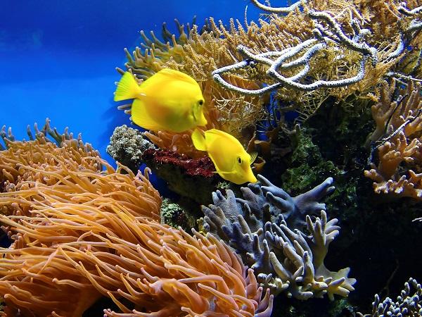 Entre las comunidades ecológicas estudiadas están los corales. / Bruno Glätsch.