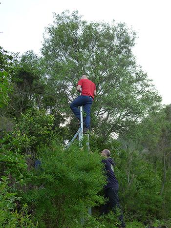 El equipo mide, con la ayuda de un smartphone, la exposición al sol de las hojas del olivo silvestre. / AA.VV.