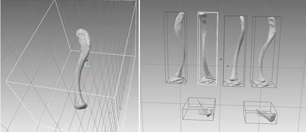 A la izquierda, orientaciones fusionadas de la clavícula completa. A la derecha, escaneo de seis orientaciones de clavícula. / Elena Ruiz.