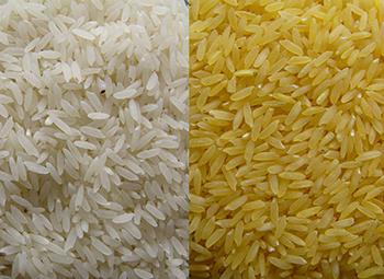 Arroz tradicional y arroz dorado (a la derecha). / Golden Rice.