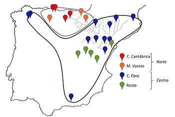 Principales haplotipos y grupos genéticos identificados con  el estudio de dos genes mitocondriales en las poblaciones españolas de cangrejo de río. / UCM.
