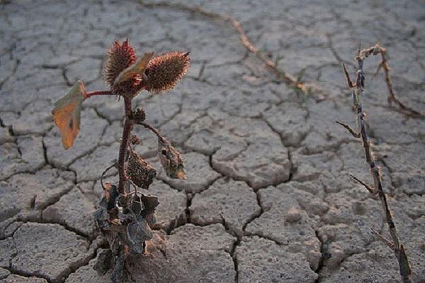 En España hay conciencia de sequía por escenas como esta, en Granada. / Antonio Martínez.