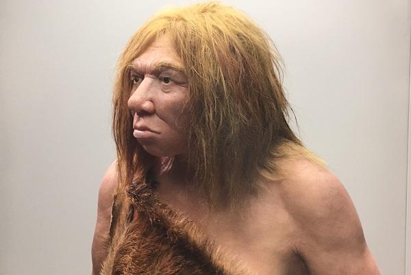 Recreación de una mujer neandertal en el Museo Arqueológico de Asturias. / UCM.