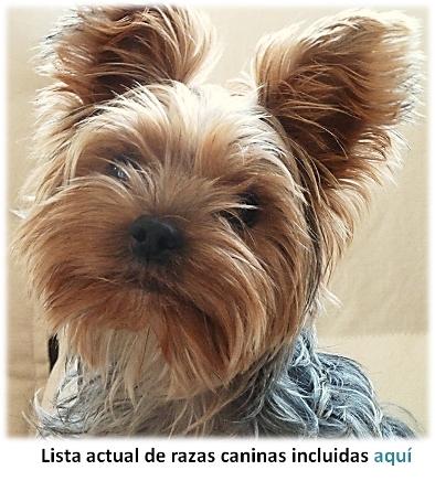 Lista de razas caninas
