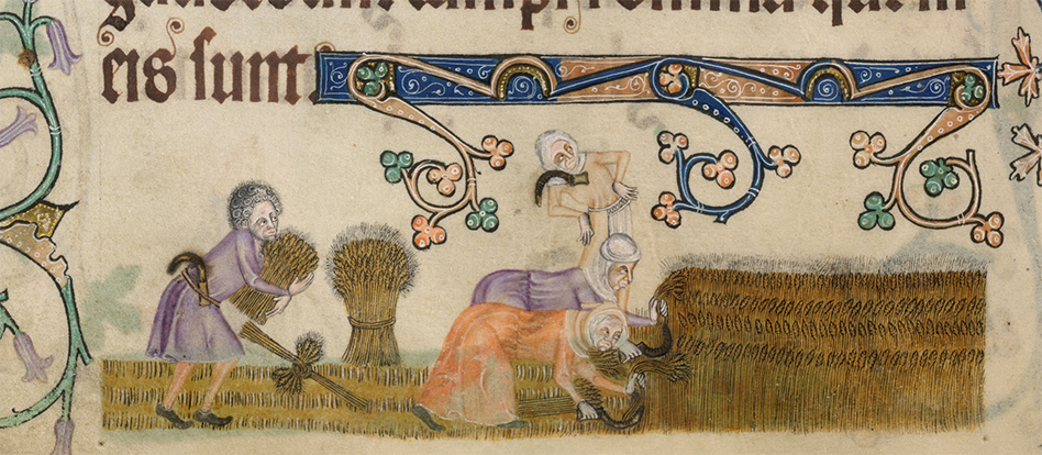 Harvesting with tunics. From the British Library digitised manuscripts collection.