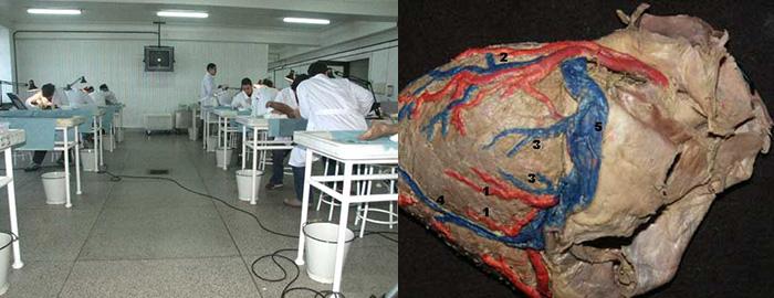 Departamento de Anatomía y Embriología Humanas