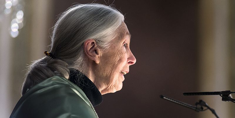 Jane Goodall, nueva doctora honoris causa por la Complutense