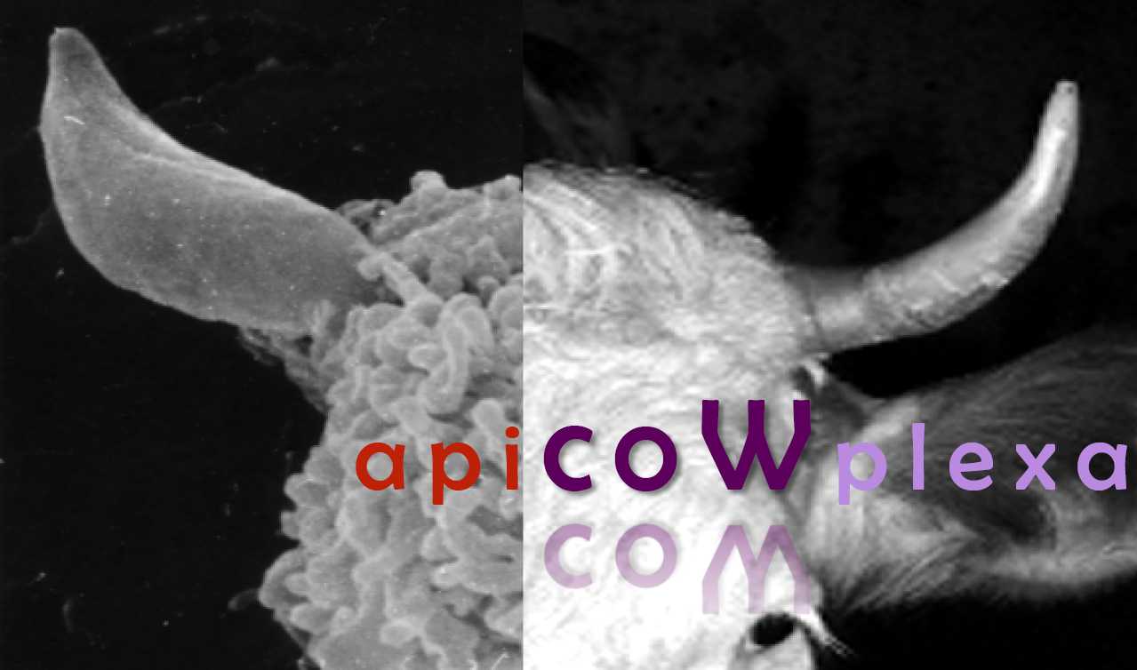 ApiCOWplexa in farm animals 4th Edition-San Lorenzo de El Escorial, Madrid, Spain - 2