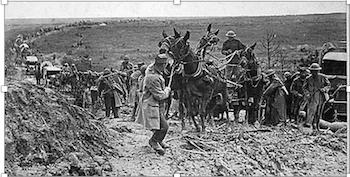 """Ganado equino empleado en la """"Gran Guerra"""" por el ejército francés en Europa."""
