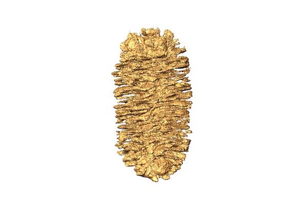 Visualizaciones 3D (obtenidas por tomografía electrónica y microscopía electrónica) de nanopartículas de oro con propiedades cuasi-helicoidales (quirales) obtenidas químicamente, que les confieren una capacidad peculiar para interactuar con la luz polarizada circularmente (Adrián Pedrazo Tardajos, Universidad de Amberes).