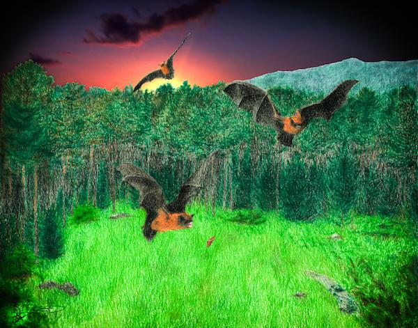 En los claros del bosque se encuentra mayor diversidad de murciélagos. / Dibujo de Daniel Truchado y David A. Oropesa.