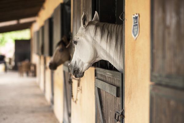 Los caballos, junto con los humanos, se sitúan en la punta del iceberg del WNV. / E. Akyurt.