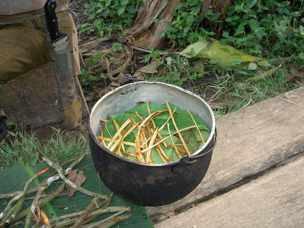 Preparación de Ayahuasca en Ecuador. / Terpsichore.