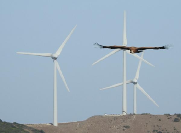 Los aerogeneradores pueden provocar la muerte de aves. / Alejandro Onrubia.