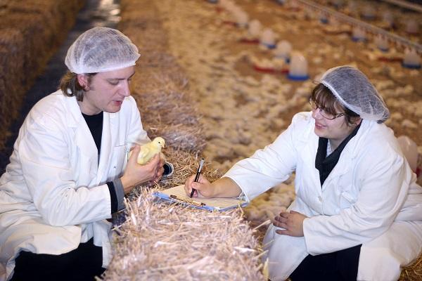 Veterinarios trabajan en una granja aviar. / Shutterstock.
