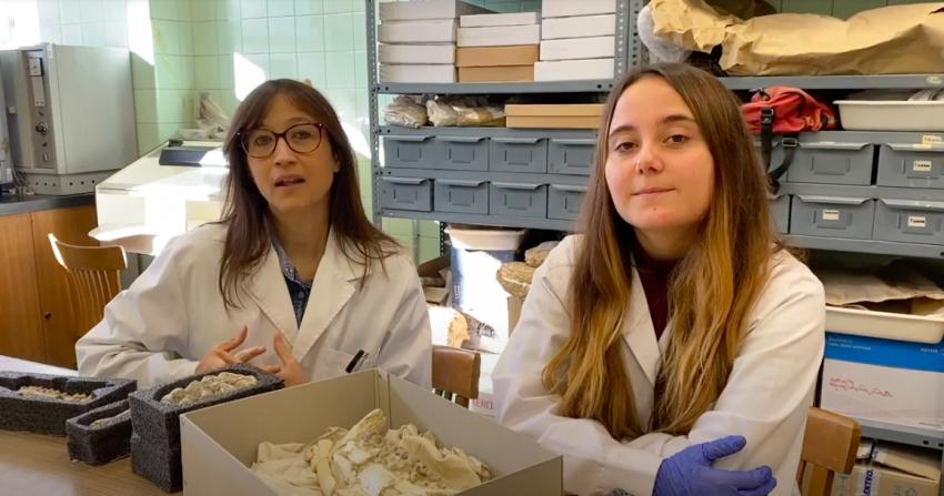 """""""Paleontología isotópica. Reconstruyendo el pasado"""""""